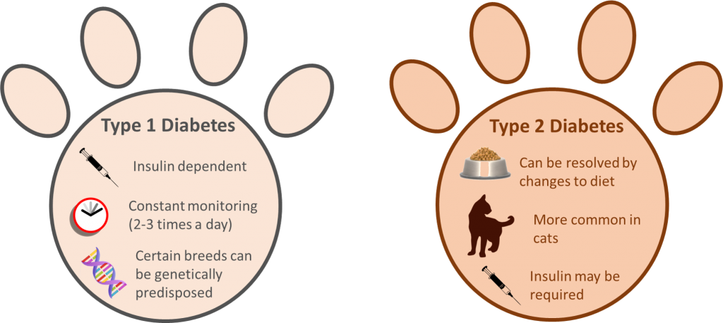 type 1 vs type 2 diabetes in pets